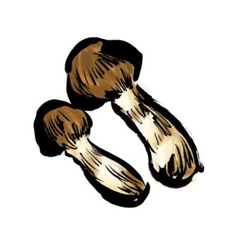 松茸のイラスト筆書き2