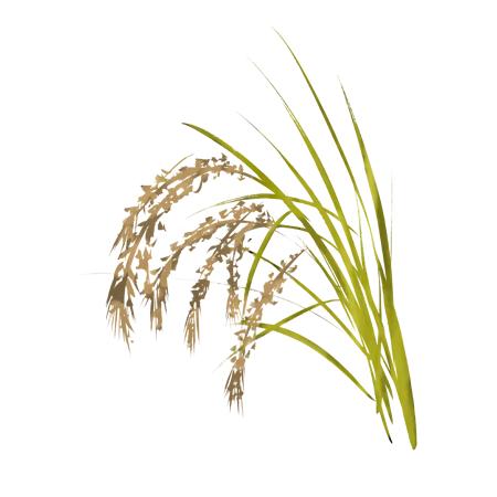 稲の墨絵イラスト