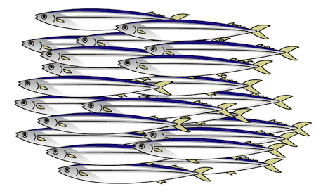 大量の秋刀魚の群れイラスト