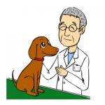 獣医さん先生のイラスト