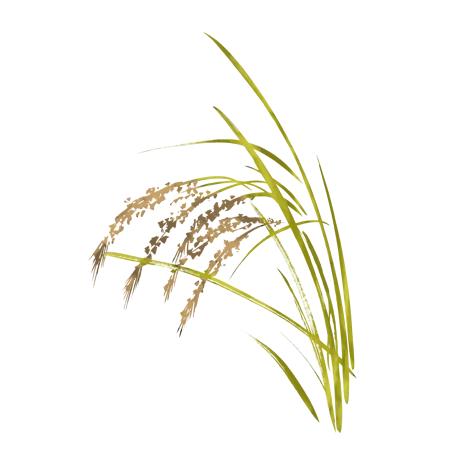 稲のイラスト2